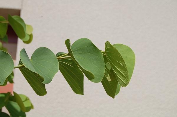 Leaves by JustineSaldana