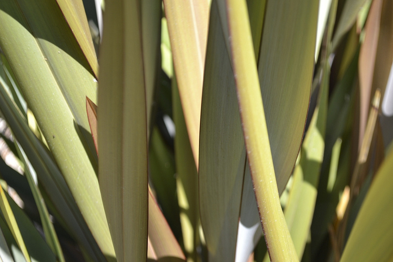 Leaf Bush
