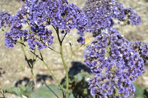 Purple Flowers by JustineSaldana