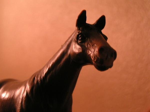 horse_2 by JustineSaldana