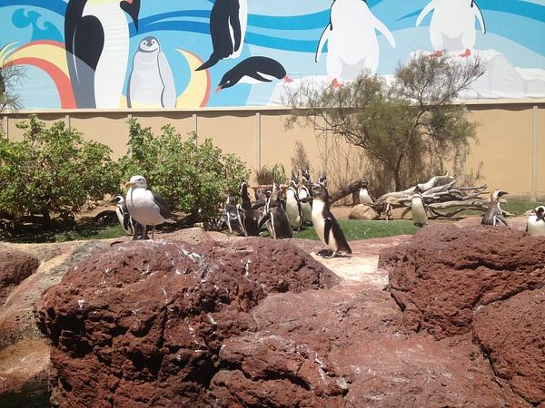 Penguins at Seaworld by RyanAvelino