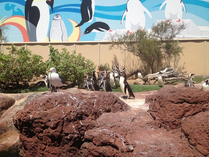 Penguins at Seaworld