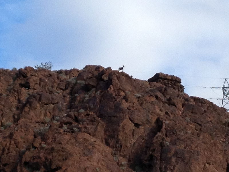 Natural goat on mountain