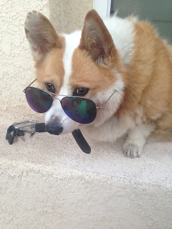 Dog with Style