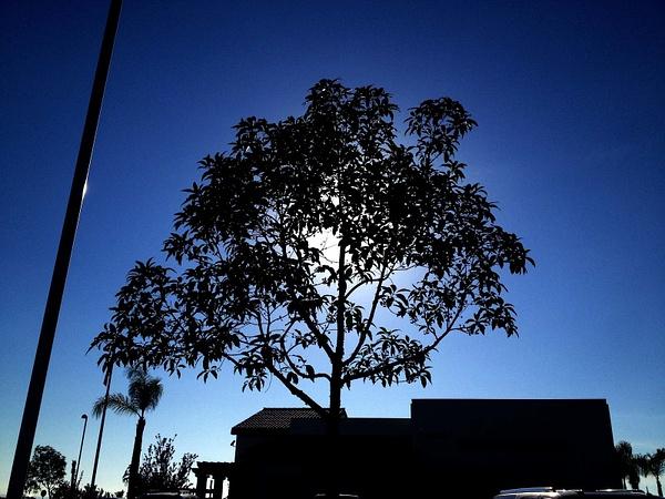 Tree Darkness by RyanAvelino