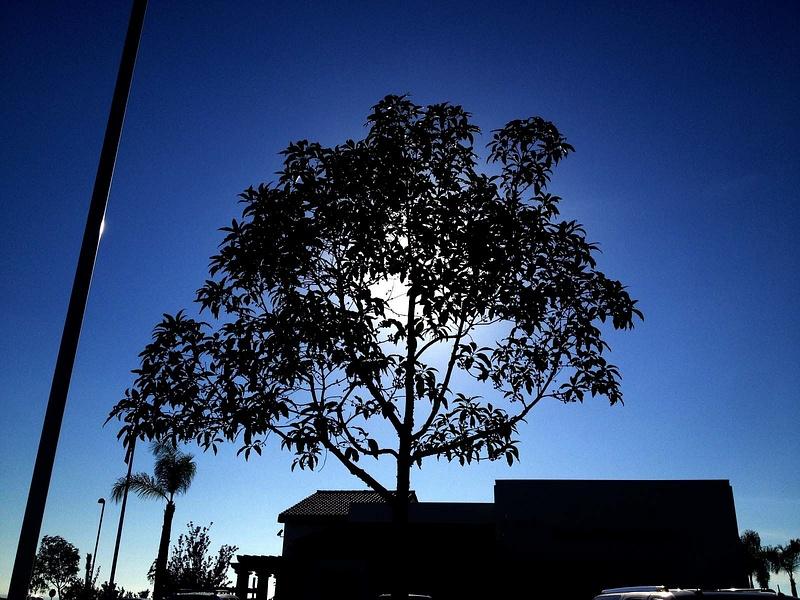 Tree Darkness