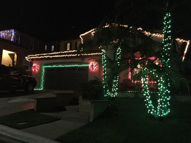 Palm Christmas