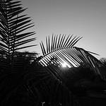 Week3_Black & White_All