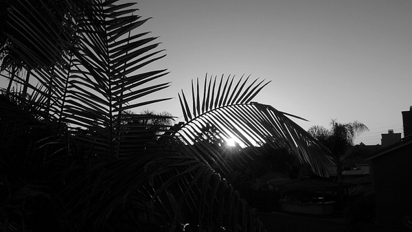 Week3_Black & White_All by MelanyM4