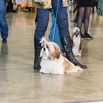 Dog Show-2014 nov, 8