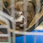Контактный зоопарк 22.11.2014