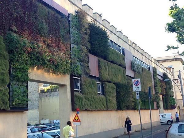 Plant wall by BradAndDebbie