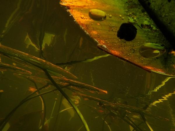 Underwater Tangle by Beth Bretzlaff