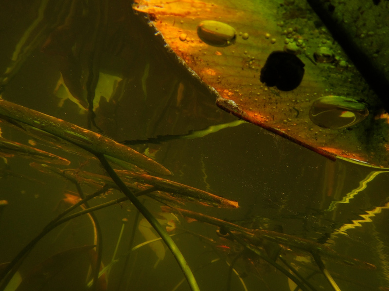 Underwater Tangle