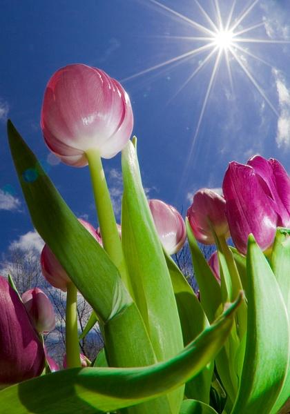 Flowers by StevenCouppas by StevenCouppas