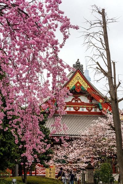 Japan2014-57 by DmitryKarmanov
