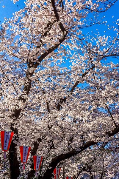 Japan2014-162 by DmitryKarmanov