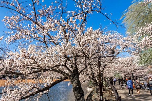 Japan2014-176 by DmitryKarmanov