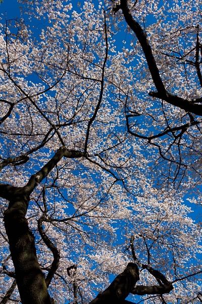 Japan2014-204 by DmitryKarmanov
