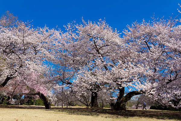 Japan2014-216 by DmitryKarmanov