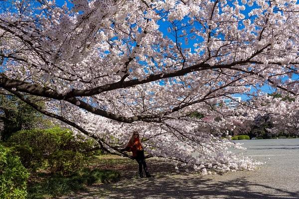 Japan2014-226 by DmitryKarmanov