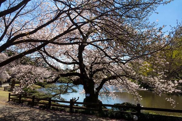 Japan2014-239 by DmitryKarmanov