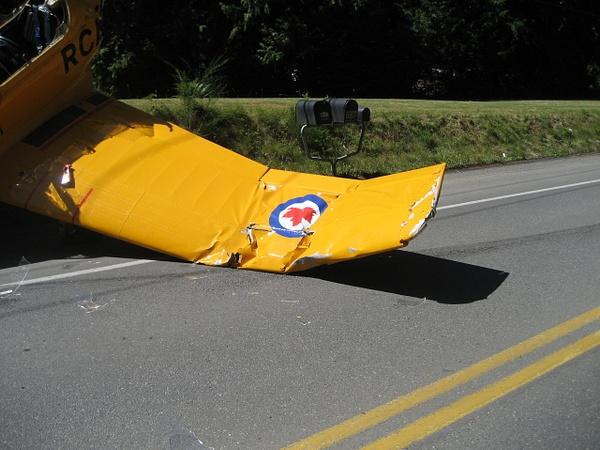 broke wing by PhotosByJesse