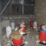Kiembeni Chickens 2013