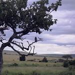 Masai Mara 2010