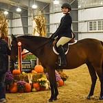 Large Pony Hunter