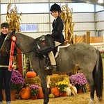 Small/Medium Pony Hunter