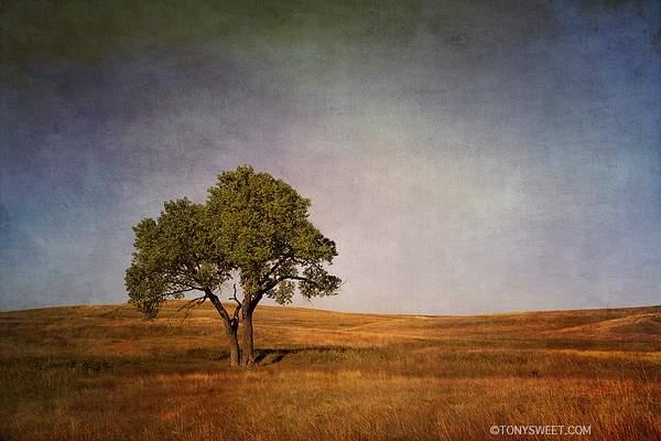 Textured tree 222