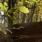 Осень на Погулянке