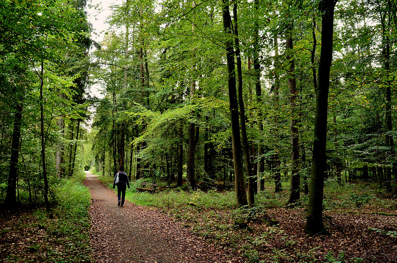 A_walk_in_the_woods