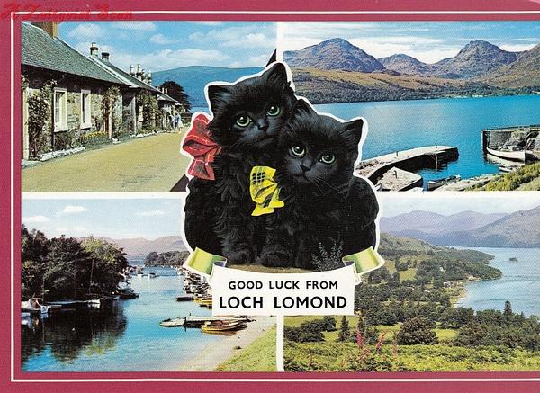 lochlomondcat by Stuart Alexander Hamilton