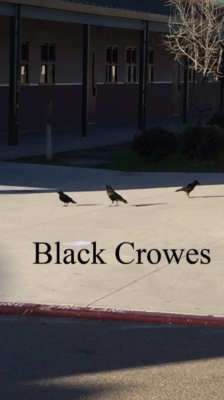 black-crowes