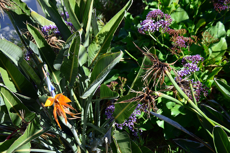 flower mix reg