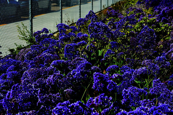 purple by IsabellaYale