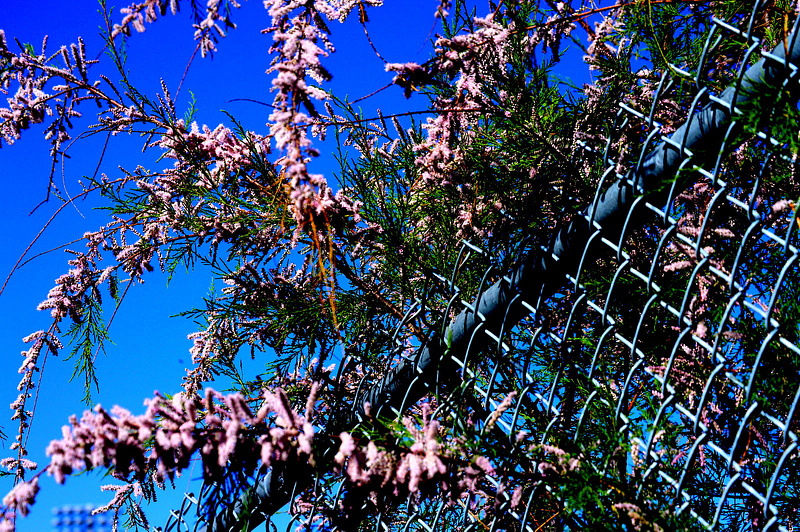 contrast flowers