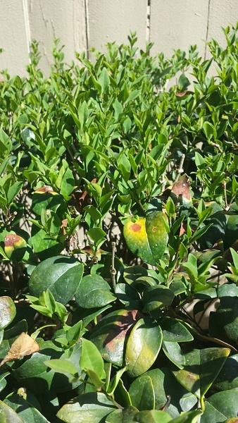 Hedge paradiese by Jose Martinez