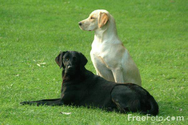 01_07_1---Pair-of-Dogs_web 222