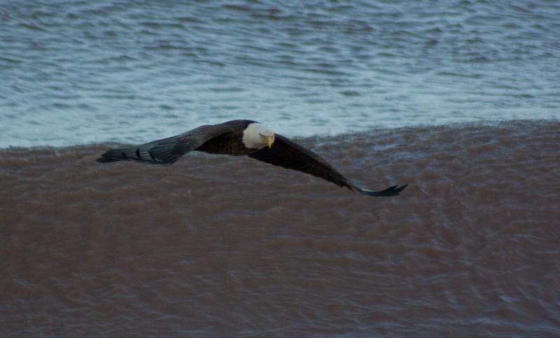 eagle may14 090