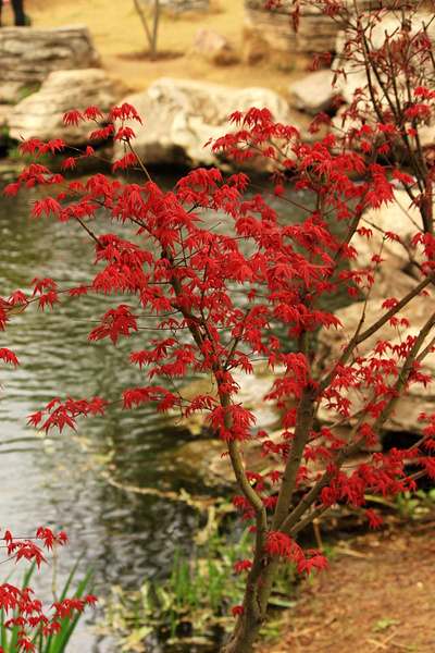 IMG_8664_副本 by A-chinese
