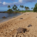 Hawaiji