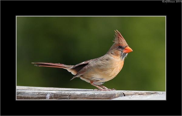 Birds by AJBrown