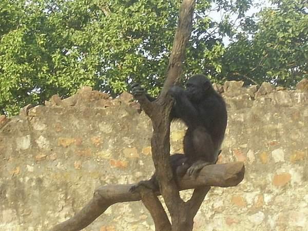 Zoo photos 222