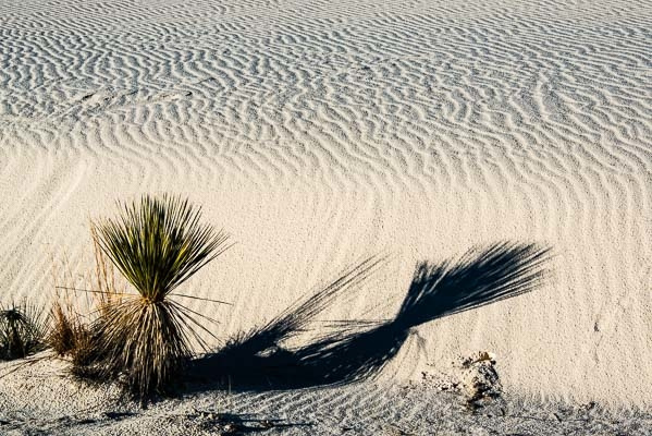 White Sands by MichaelSherman