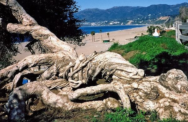 Santa Monica Seaside 1996_pe by James Bickler