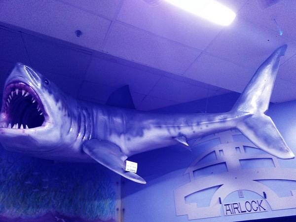 shark by SHWB X Buffet Boys
