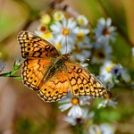Insects, Dragonflys & Butterflys